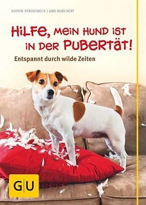 Hilfe, mein Hund ist in der Pubertät